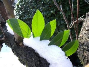 leaves_snow