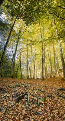 trees_fall_spring