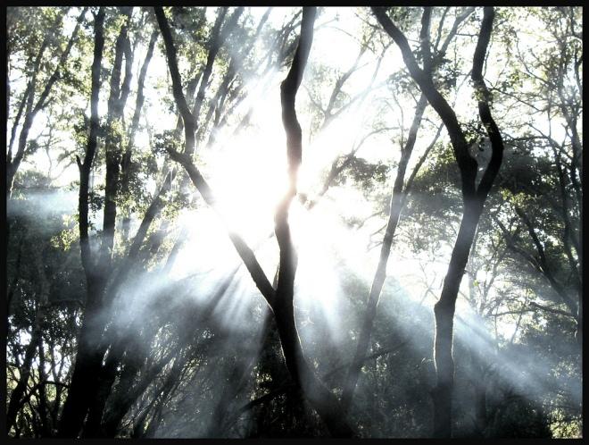 trees_light_vectors