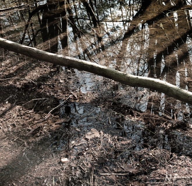 woven_wood_water