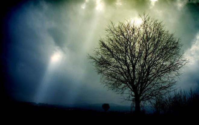 new_light_and_tree