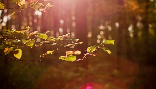 filtered_forest